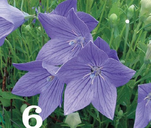Beautiful Purple Plant, Beautiful Flowers, Beautiful Garden
