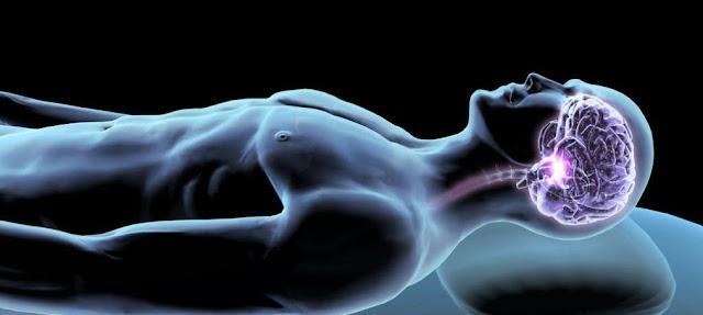 Ritmos cerebrales, sueño y biologia