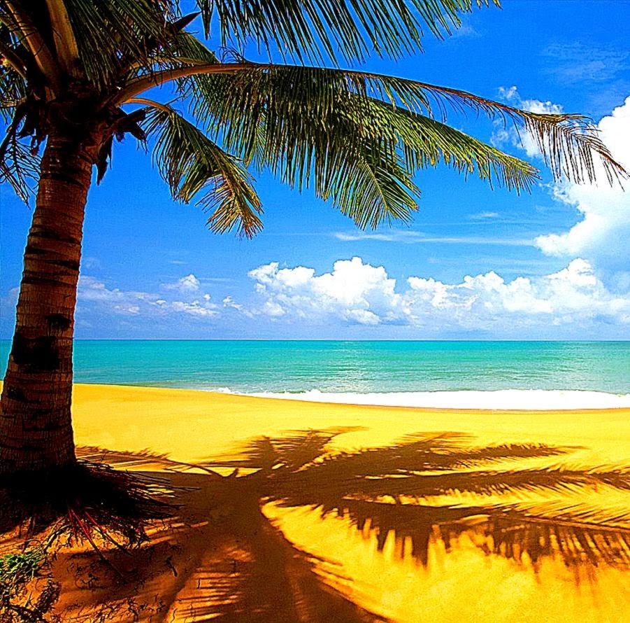 Paradise Beach: Paradise Beach Hd