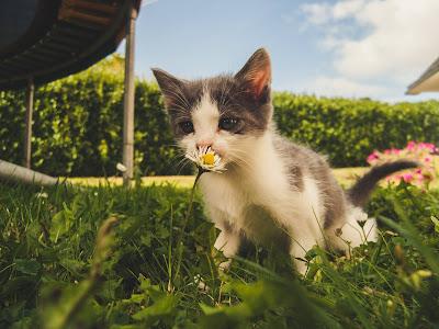 Substances toxiques pour les chats à la maison