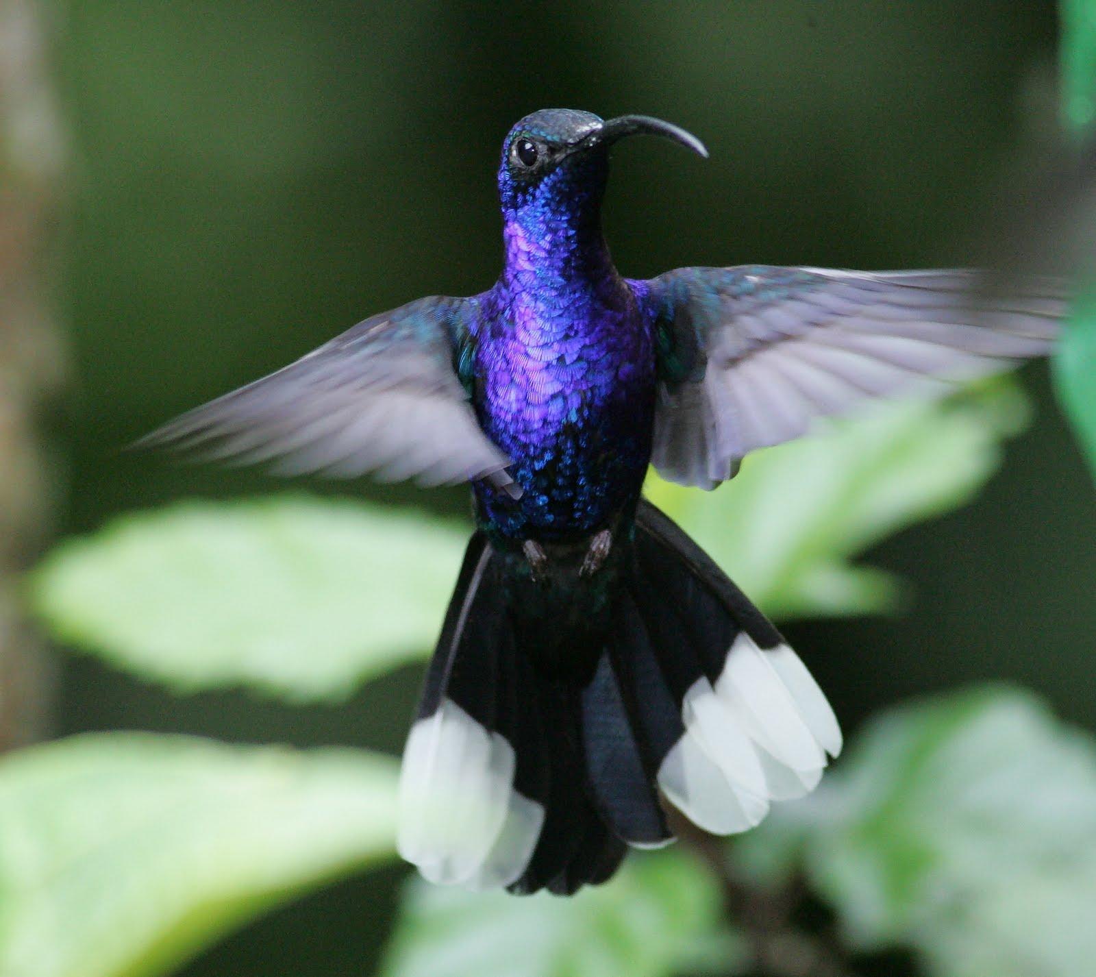 Birds: Animals Zoo Park: 7 Beautiful Birds Wallpapers For