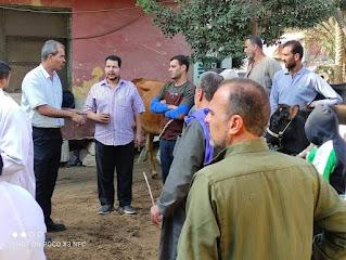 الزراعة: 6 قوافل بيطرية لفحص وعلاج  3500 رأس ماشية مجانا بالمنوفية