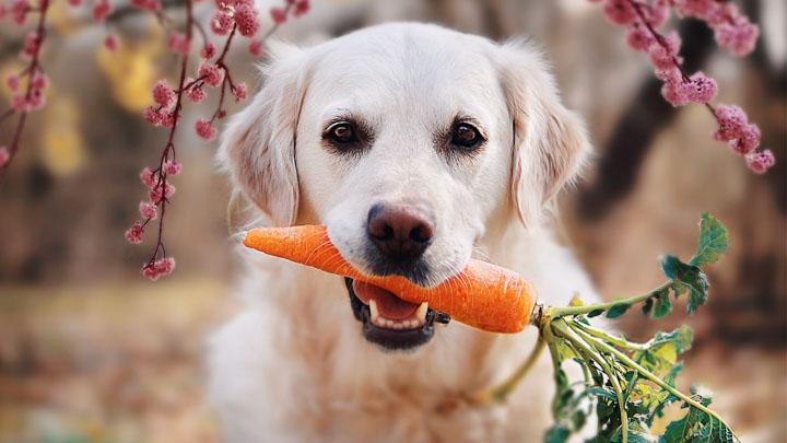dog-supplements
