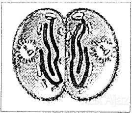 Pembahasan Biologi Un 2014 No 31 35