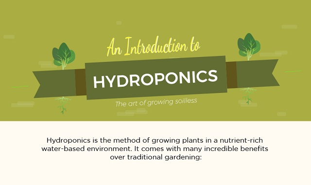 How to grow food with Hydroponics 365 days a year