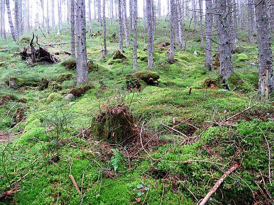 Mchy pokrywają wszystko co leży na dnie lasu.