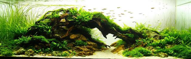 foto seni aquascape yang cantik menarik dan menakjubkan