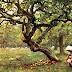 El origen del árbol de la manzana por Alejandro Dumas