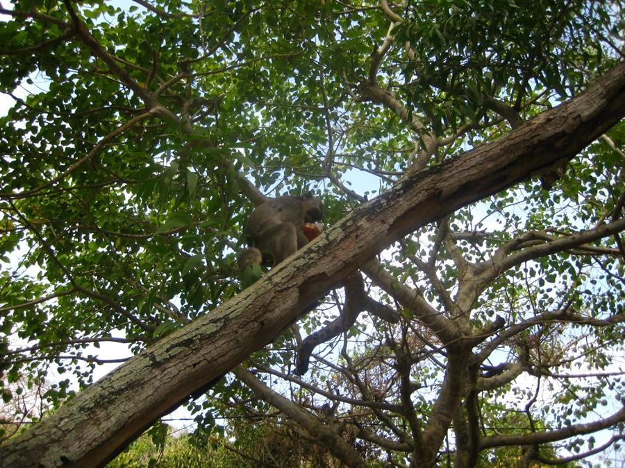 나무 위 원숭이
