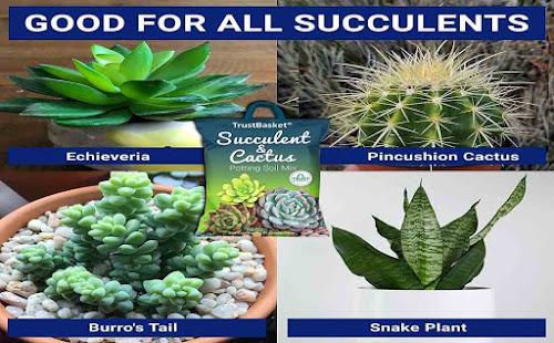 Best Succulent and Cactus Potting Soil Mix