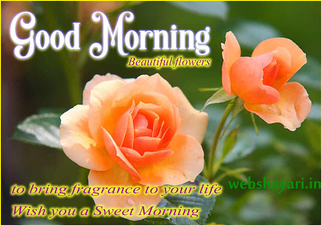 rose gud morning photo  download