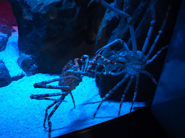 Spider crabs in the Grand Aquarium, Ocean Park, Hong Kong