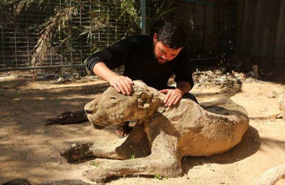 Брошенные умирать животные в палестинском зоопарке превратились в мумии!