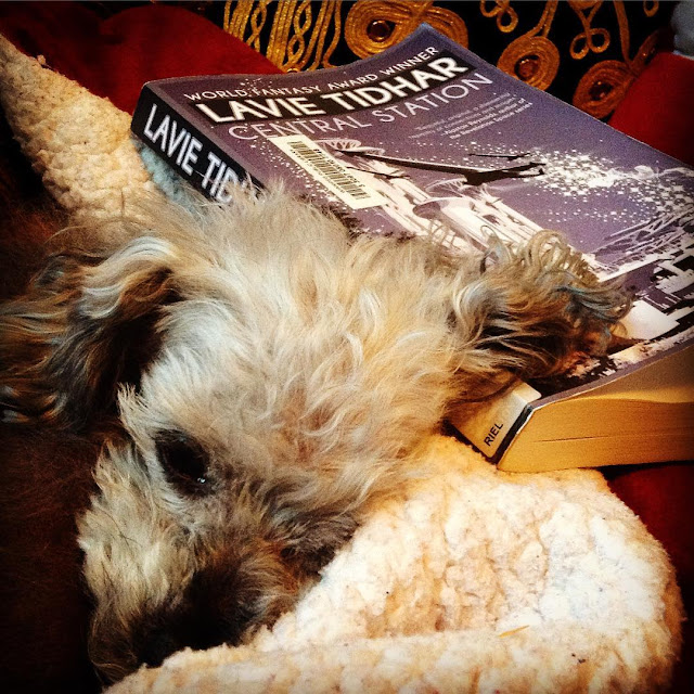 Murchie curls up in a red blanket nest so only his head peeks out, one ear splayed atop the trade paperback copy of Central Station laid behind him. The book's cover features a monochromatic purple travel poster of a towering spaceport with two ships departing from it, glittery contrails in their wake.