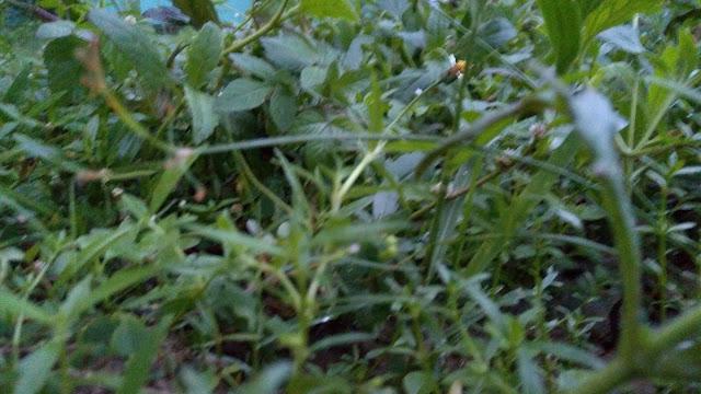 Beautiful Nature Green Grassland |FromS Photography