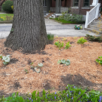 Toronto High Park North New Front Yard Makeover After by Paul Jung Gardening Services--a Toronto Gardening Company
