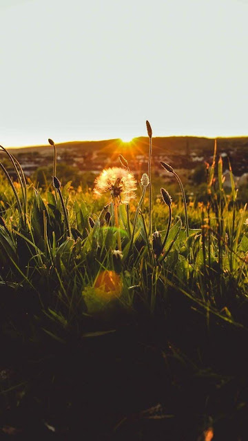 Good morning nature sunrise with grass
