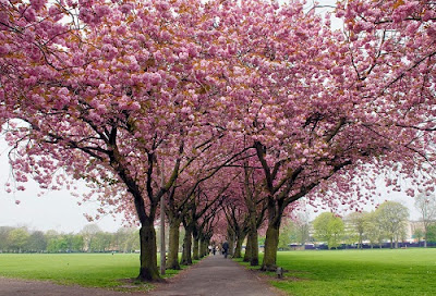 Spring Quotations - Top 30 Quotations About Spring Time