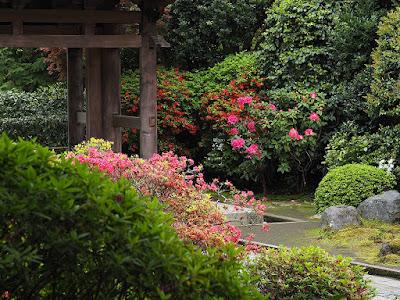 Shakunage (Rhododendron) flowers: Kaizo-ji