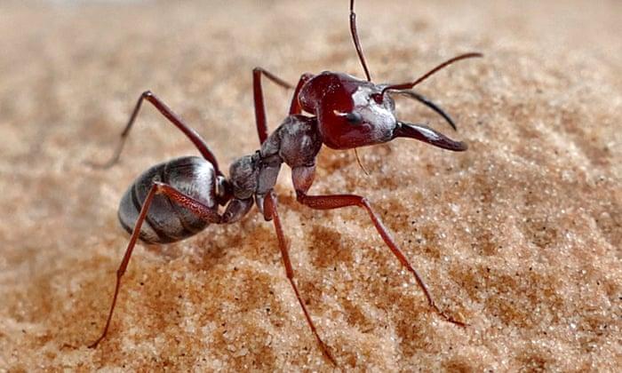 Saharan Silver Ant, Daily Current Affairs: 3rd November 2019