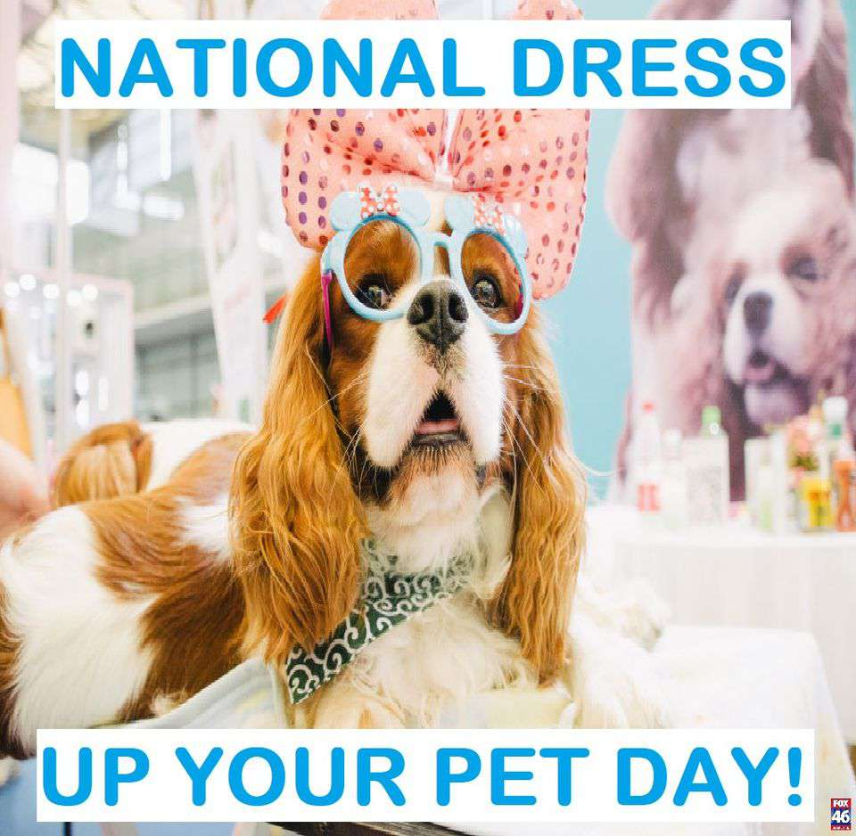 National Dress Up Your Pet Day Wishes Unique Image