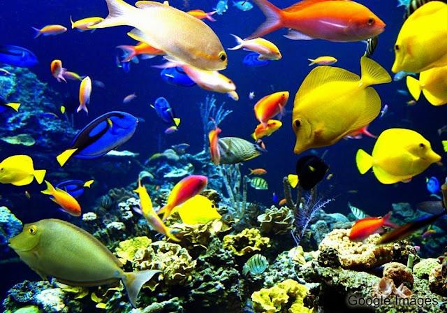 10 Ikan Hias Air Laut Paling Mempesona