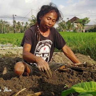 Bagi Hartono Lokodjoyo, Bertani Adalah Pekerjaan Paling Nikmat dan Menguntungkan