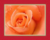 Interpretation of the orange color in a dream Seeing the orange color in a dream