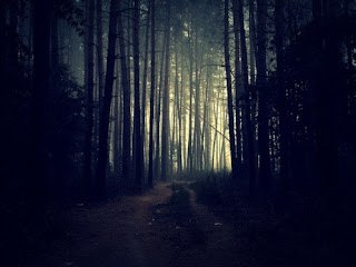 Image of gloomy forest