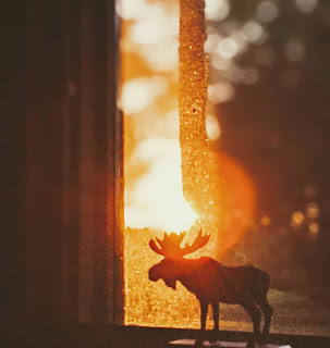 Sun Setting Over Moose