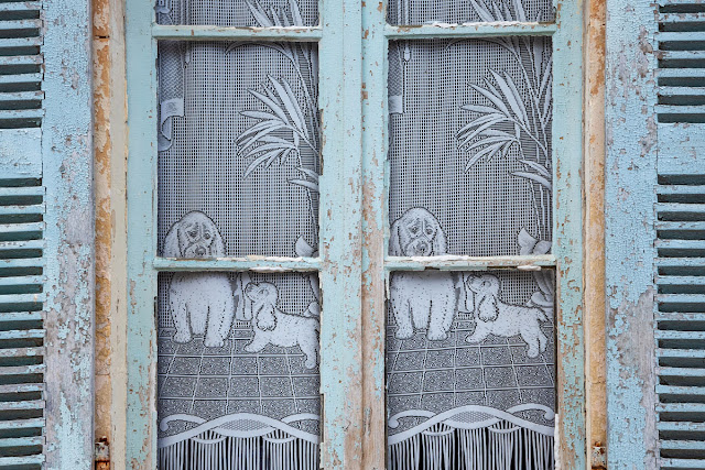 Companion Animal Psychology turns 8; lace curtains with dogs