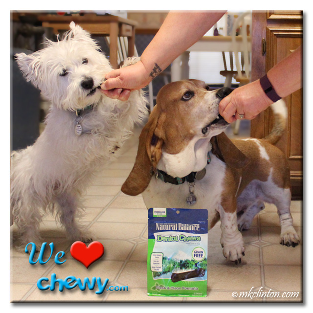 Westie and Basset Hound eating a Natural Balance Dental chew with the bag on the floor