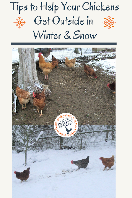 Can chickens go outside in winter? Yes! The truth is, they like to get outside and explore in pretty much any weather and it's always good for them to get some fresh air.