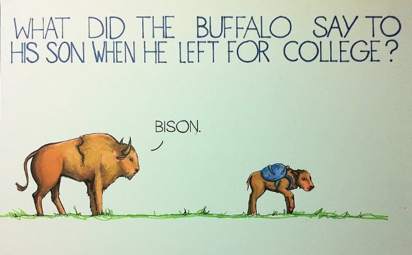 Funny Buffalo Bison Pun Joke College