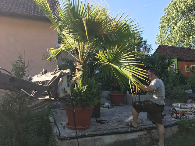 wie befestigt man eine Palme an einer Frontladergabel? (c) by Jochim Wenk