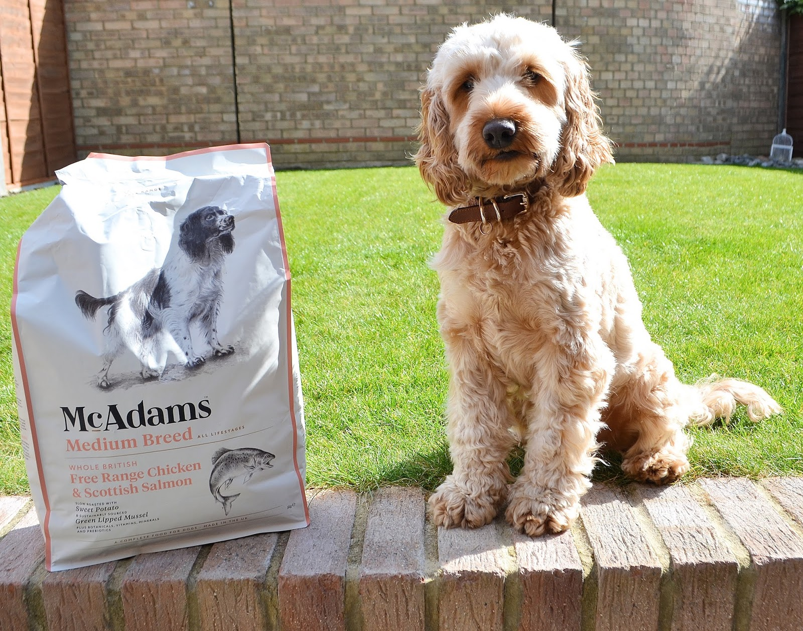 Is Mcadams Dog Food Good