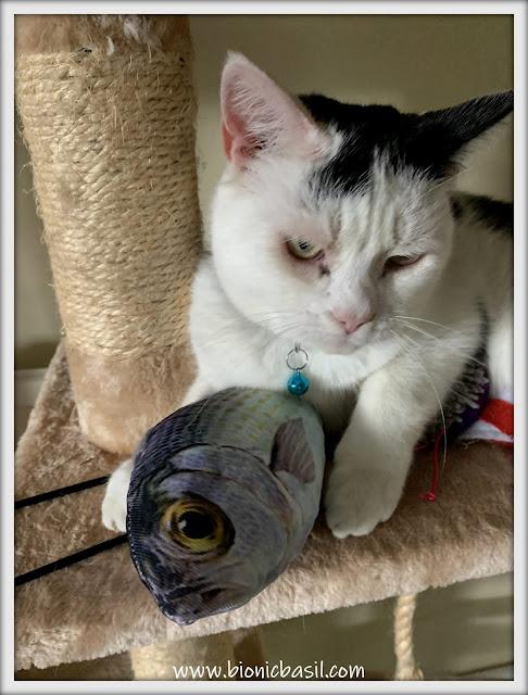 Smooch Lands A Big Fish ©BionicBasil® The Pet Parade 376