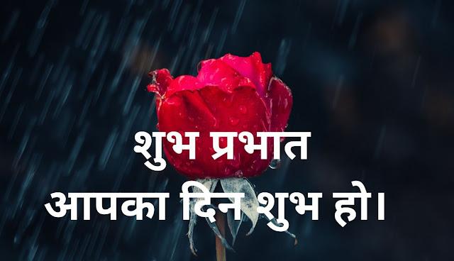 शुभ प्रभात आपका दिन शुभ हो।  Red Rose Image