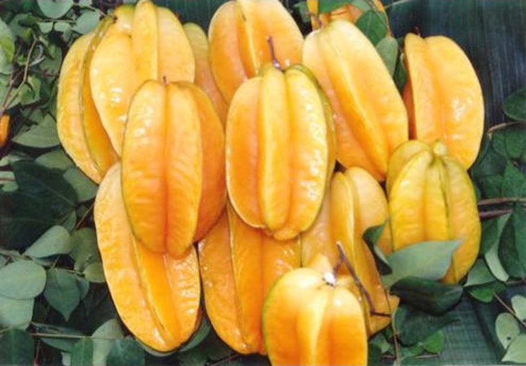 benih buah belimbing unggul 12 seed Papua Barat
