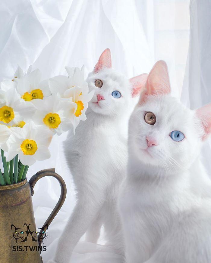 Gambar Kucing Gemes godean.web.id