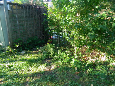 High Park Toronto Back Yard Fall Cleanup Before by Paul Jung Gardening Services--a Toronto Organic Gardening Company