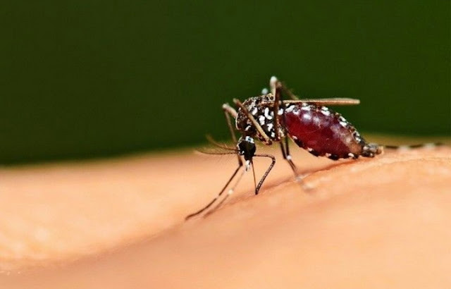 Definition Malaria - Symptoms, Causes, and Treatment