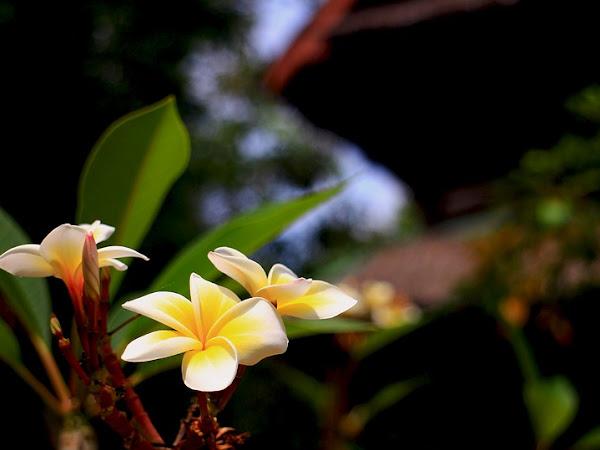 Berwisata ke Taman Wisata Matahari di Bogor