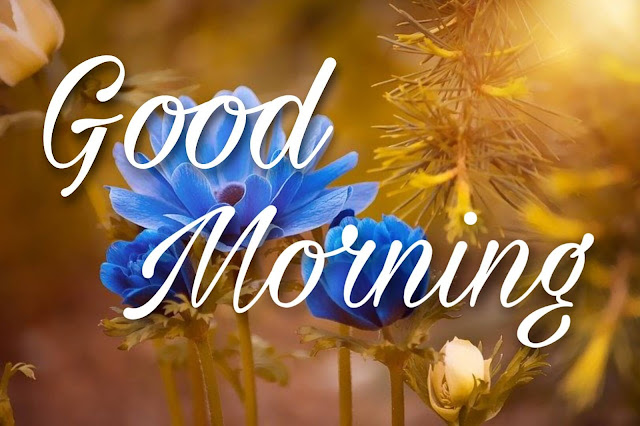 good morning images with blue rose flower