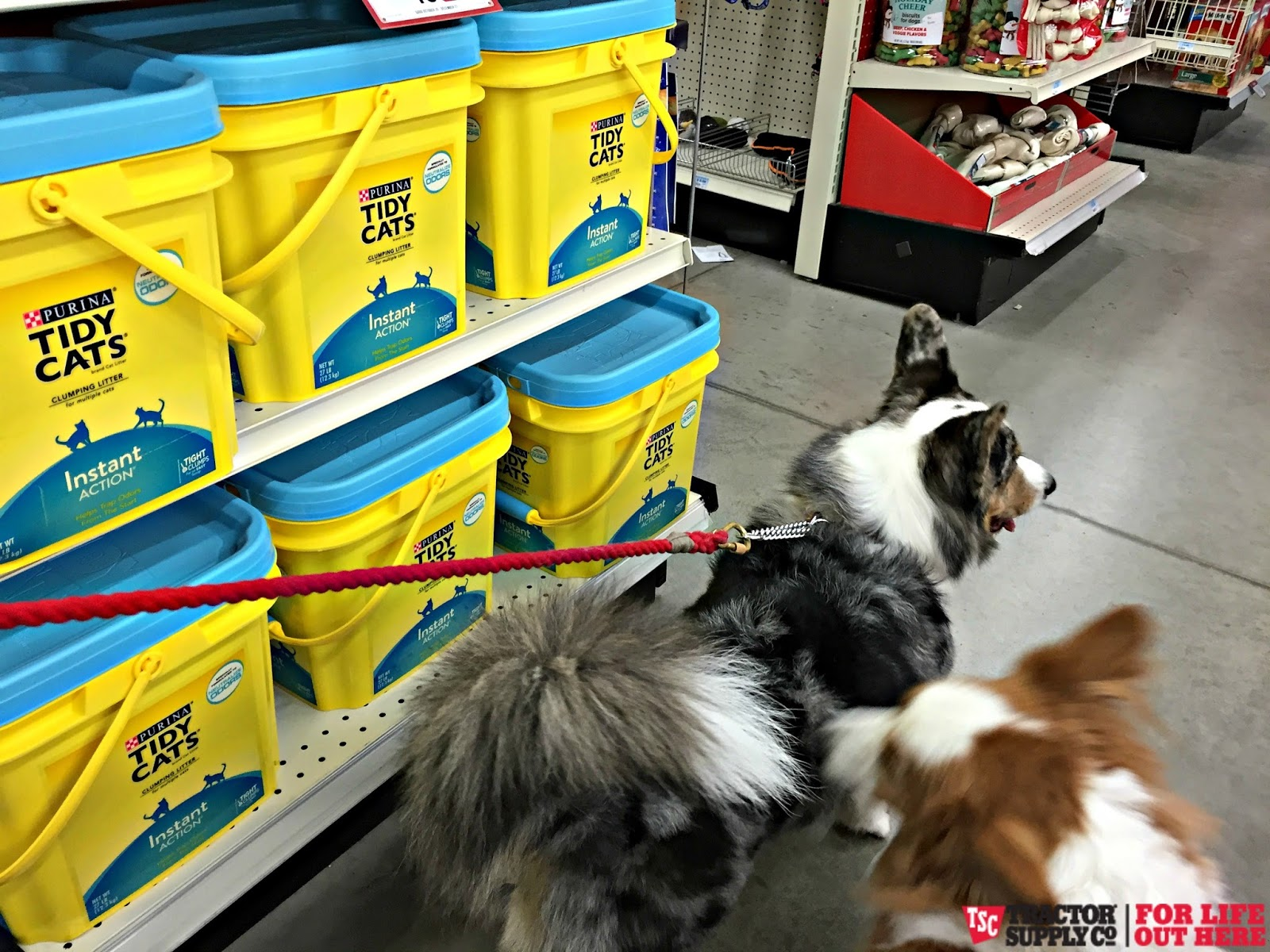 Tractor Supply Dog Food Ratings
