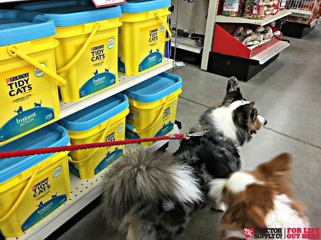 Image Result For Tractor Supply Dog