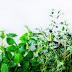 Plantele aromatice si locul lor in decorul casei