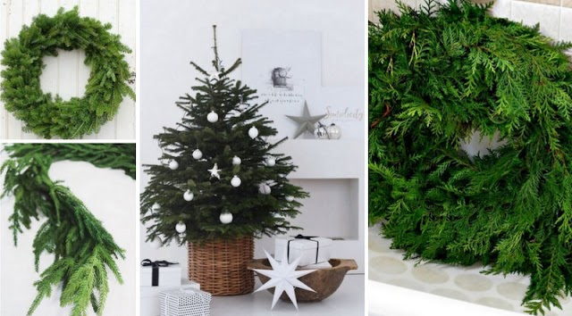 Πως θα διατηρήσετε φρέσκα για περισσότερο χρόνο το Δέντρο & τις Χριστουγεννιάτικες Συνθέσεις από φυσική πρασινάδα