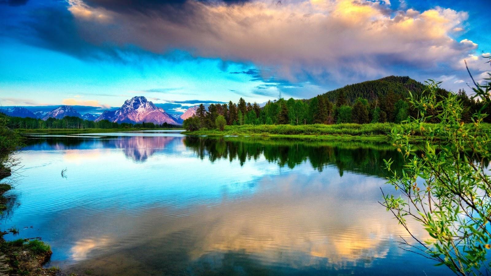 مجموعة من صور الخضرة مع المياه