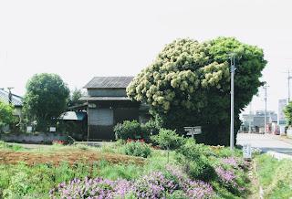 栗の木のある家 写真